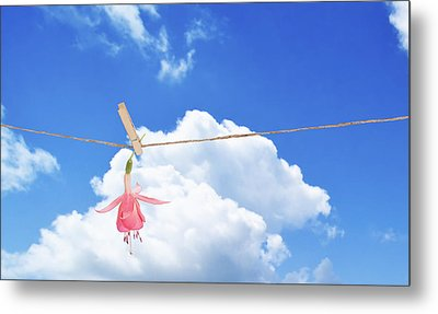 Single Fuchsia Head Metal Print by Amanda And Christopher Elwell