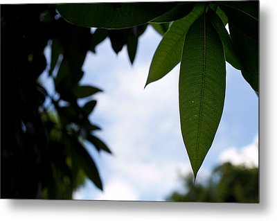 Single Mango Leaf Silhouetted Against The Sky Metal Print by Anya Brewley schultheiss