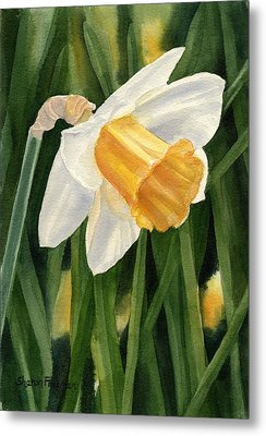 Single Yellow Daffodil Metal Print by Sharon Freeman