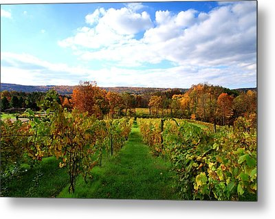 Six Miles Creek Vineyard Metal Print by Paul Ge
