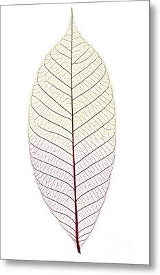 Skeleton Leaf Metal Print by Elena Elisseeva