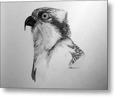 Sketch Of An Osprey Metal Print by Leslie M Browning