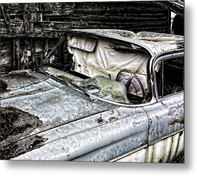 Slimy Sue  Metal Print by JC Photography and Art