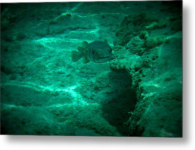 Smiling Fish Metal Print by Kimberly Perry