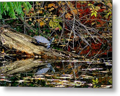 Snapper Turtle Metal Print by Frozen in Time Fine Art Photography