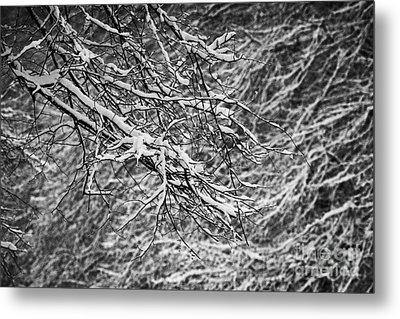 snow coating on tree branches on a cold snowy winters day Belfast Northern Ireland Metal Print by Joe Fox