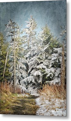 Snow Covered Trees Metal Print by Cheryl Davis