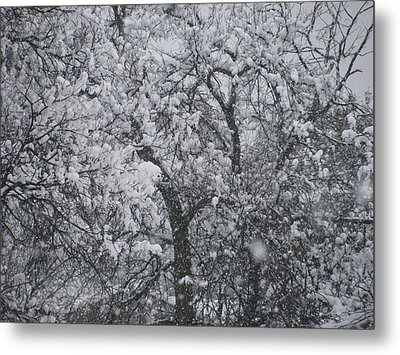Snowblind Metal Print by Shawn Hughes