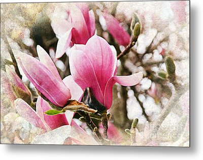 Snowy Magnoila Mist  Metal Print by Andee Design