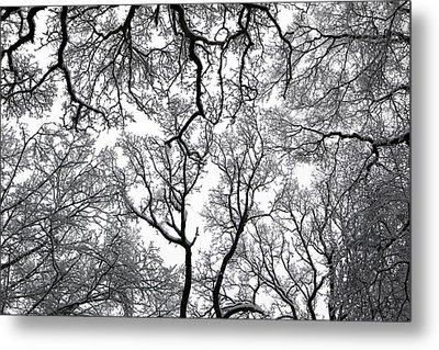Snowy  Trees Metal Print by Richard Newstead