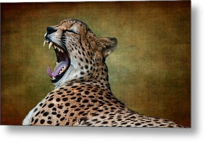So Tired Metal Print by Heather Thorning