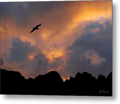 Soaring In The Midnight Sun Metal Print by Joe Bonita