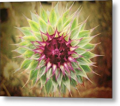 Soft As A Thistle Metal Print by Amy Tyler