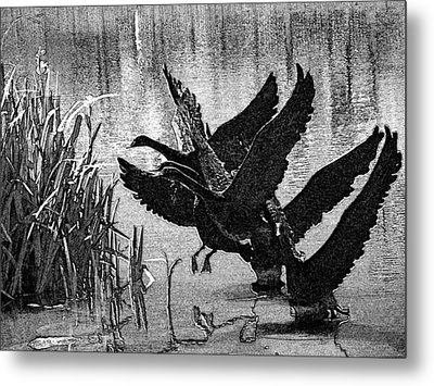 Soft Landings Metal Print by Lenore Senior