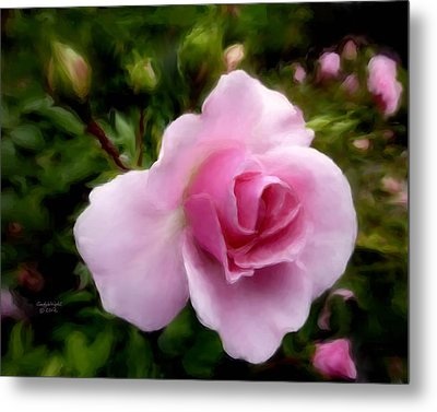 Softly Romantic Metal Print by Cindy Wright