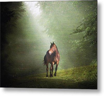 Solitary Horse Metal Print by Christiana Stawski