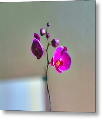 Some #flowers That Were Sent To My Wife Metal Print by Kel Hill