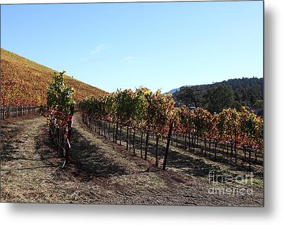 Sonoma Vineyards - Sonoma California - 5d19311 Metal Print by Wingsdomain Art and Photography