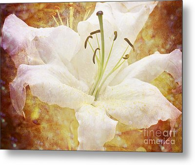 Sparkling Lily Metal Print by Clare Bambers