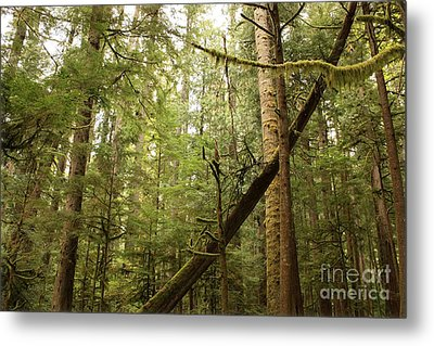 Spirit Of The Pacific Northwest Metal Print by Carol Groenen