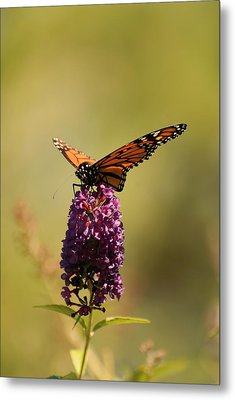 Spread Your Wings And Fly Metal Print by Angie Tirado