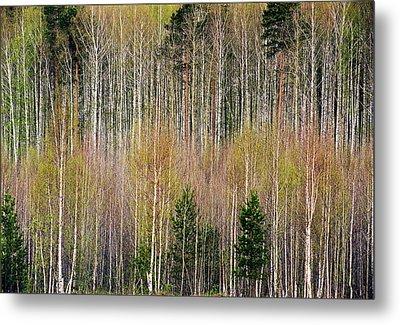 Spring Forest Lace Metal Print by Vladimir Kholostykh