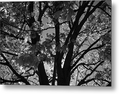 Spring Forth Metal Print by Lyle Hatch