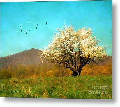 Spring In The Mountains Metal Print by Darren Fisher