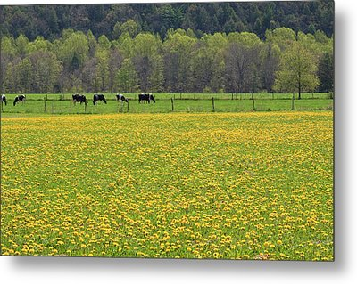 Spring Meadow Flowers Metal Print by John Stephens