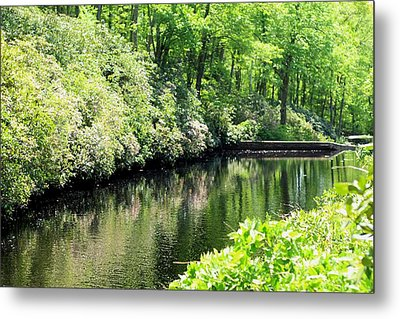 Spring Stream Metal Print by Sara Walsh