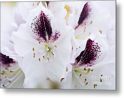 Spring White Metal Print by Jacky Parker