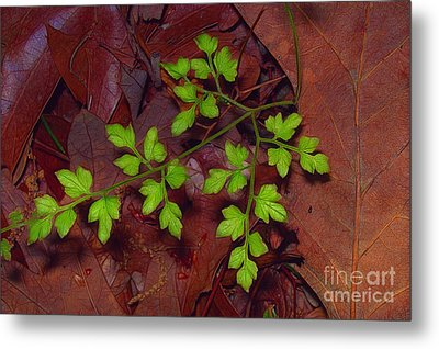 Spring Will Come Metal Print by Judi Bagwell