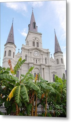St Louis Cathedral Rising Above Palms Jackson Square French Quarter New Orleans Print  Metal Print by Shawn O'Brien