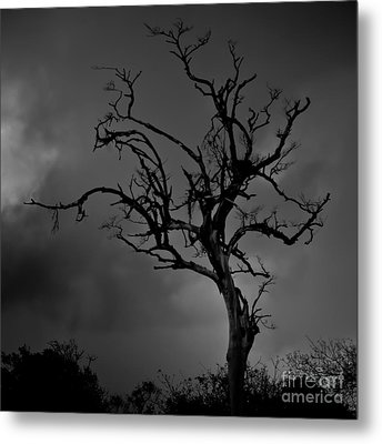 Stormy Tree Metal Print by Kevin Barske
