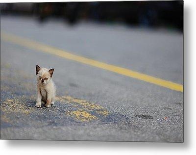 Street Kitten On Road Metal Print by Carlina Teteris