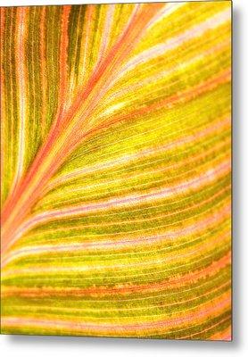 Striped Leaf Metal Print by Bonnie Bruno