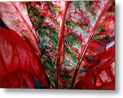 Study Of The Croton 2 Metal Print by Jennifer Bright