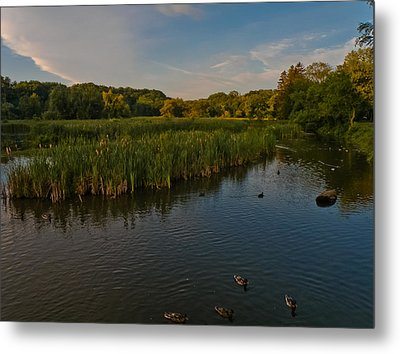 Summer Duck Pond Metal Print by Jiayin Ma