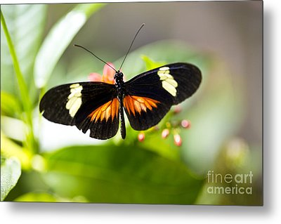 Summer Love Metal Print by Leslie Leda