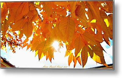 Sun Kissed  Deciduous Metal Print by Danielle  Parent