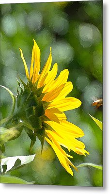Sunflower 3 Metal Print by Pamela Cooper