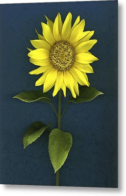 Sunflower Metal Print by Deddeda