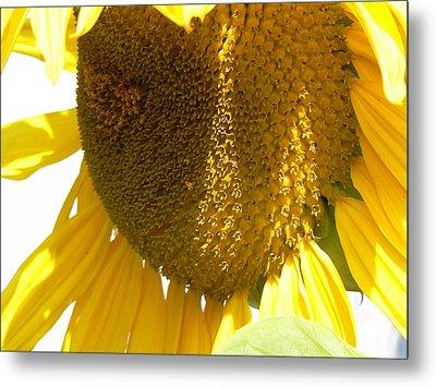 Sunflower Love  Metal Print by Pamela Patch
