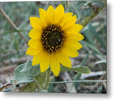Sunflower Smile Metal Print by Sara  Mayer