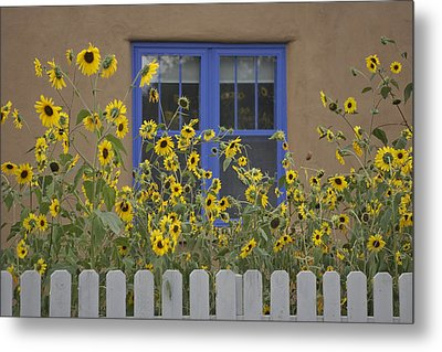 Sunflowers Bloom In A Garden Metal Print by Ralph Lee Hopkins