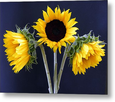 Sunflowers Three Metal Print by Sandi OReilly