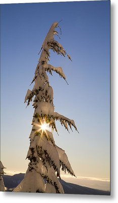 Sunlight Through Snow-covered Tree Metal Print by Craig Tuttle