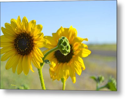 Sunnyside Up Metal Print by Teresa Dixon