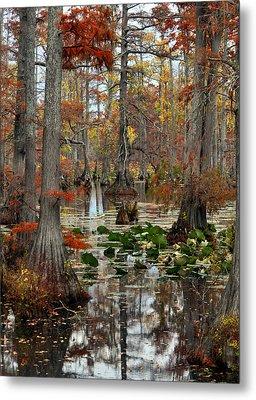 Swamp In Fall Metal Print by Marty Koch