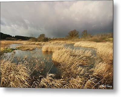 Swampland Metal Print by Robert Lacy
